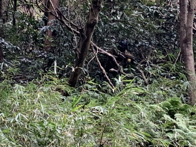 サバゲーフィールドGARDEN-Z 11月29日(日)定例会NO.4