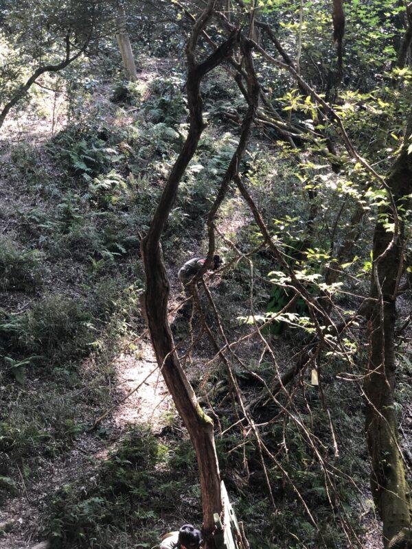 サバゲーフィールドGARDEN-Z 3月27日(土)定例会NO.2