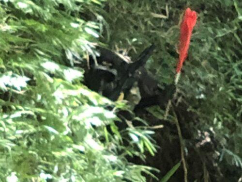 サバゲーフィールドGARDEN-Z 7月23日(金)定例会NO.6